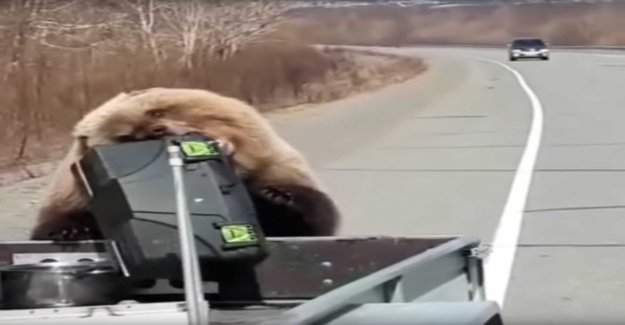 Steal the bear hunters ' food straight out of the car
