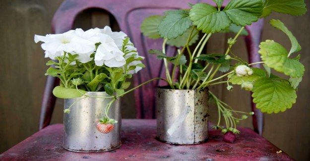 The cold threatens unprepared plants