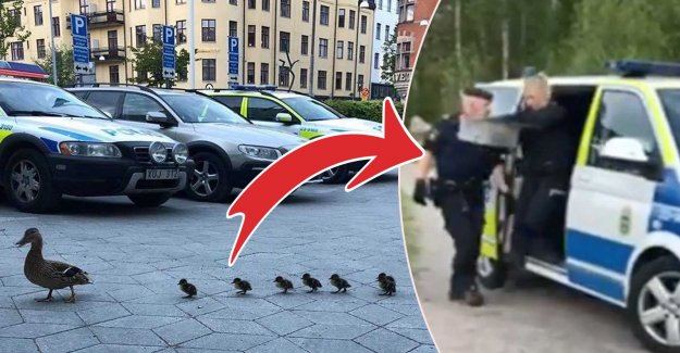 This pulls the police out to save the ducks