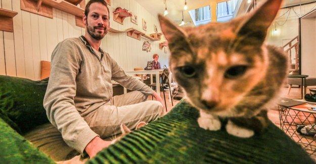 Under 8 years are no longer welcome in kitty Kuro Neko: Kitten store was the final straw