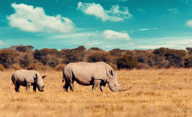 Resources to Learn about Endangered Animals