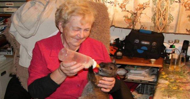 Inger tears: Got stolen kangaroos for the third time
