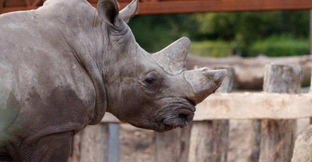 Rhino killed in Copenhagen Zoo