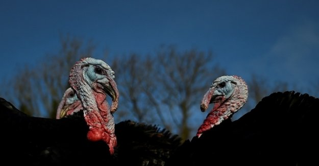 Google, Fitbit, and the two turkeys