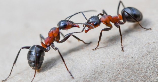 Ants from a nuclear bunker were cannibals