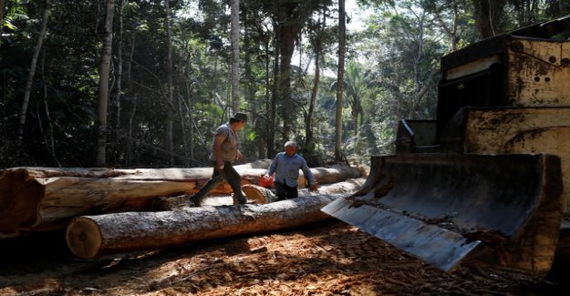 Deforestation of the rain forest so bad since 2008
