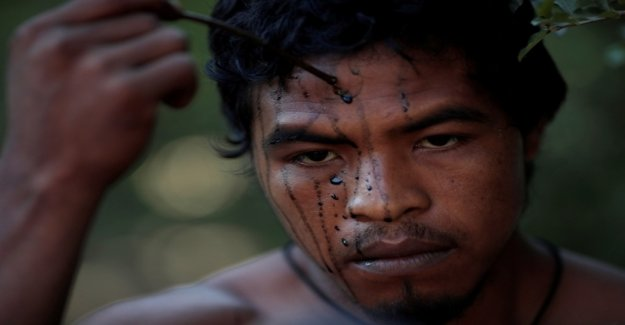 Indigenous guardians of the forest killed