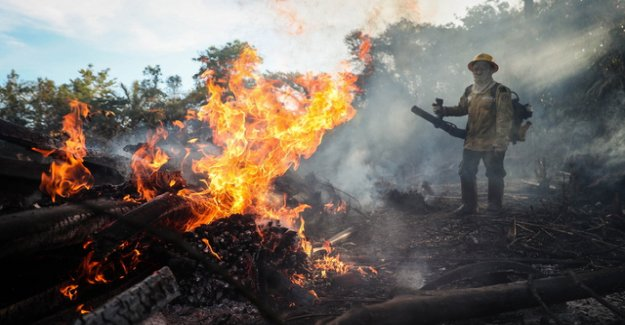 Number of forest fires in the Amazon drops to record low