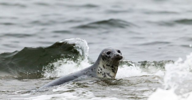 Seal and ringed seal population growth in the Baltic sea – ringed amounts vary April were jäätilan you with