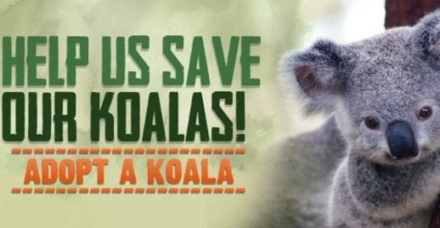 Australia, 30% of koalas died in the fire