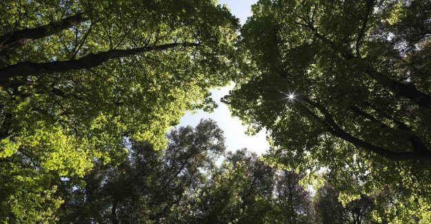 Between reforestation and climate change, the state of natural capital in Italy