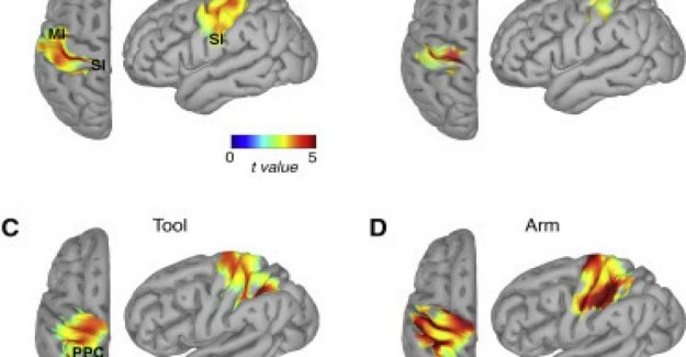 The brain extends the perception of the body to the tools that we have in hand