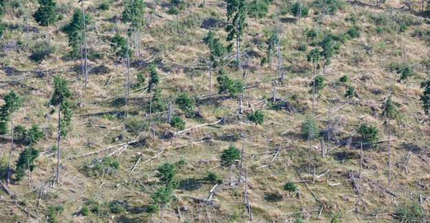 In Romania the Amazon of Europe. The victim of the wild deforestation