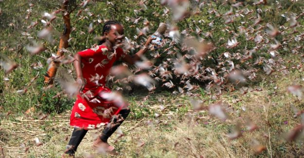 Locusts invade the Horn of Africa. At risk agriculture and air traffic