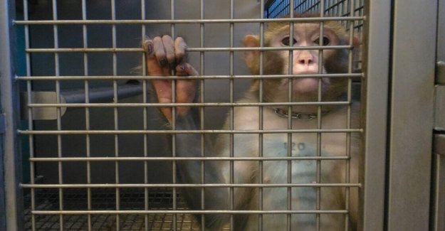 The Council of State, save and the macaques: stop the experimentation of the university of Turin