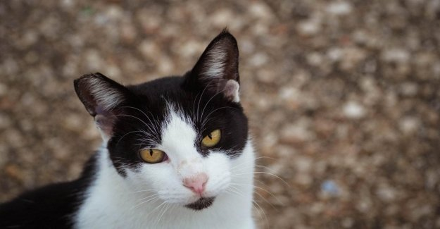 Adopt a cat. Here's what to do before you welcome him home