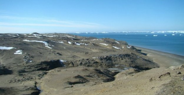 Antarctica, new record warm, touched 20 degrees on the island of Seymour