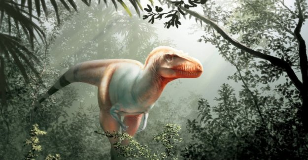 Discovered cousin of T. rex, a dinosaur that left no escape