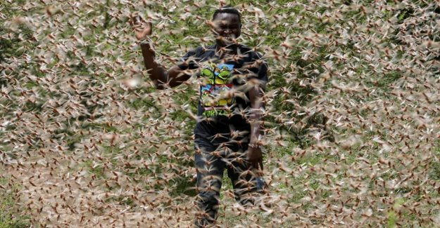 It seems the apocalypse: the eight striking photos of locust invasion in Africa
