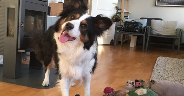 Whiskey, the dog who recognizes you by name 90 objects. And knows how to share them in different categories