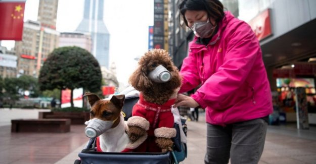 Pets and coronavirus: do not transmit but are at risk of infection