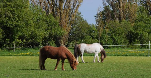 Warning: Toxic seeds are killing horses