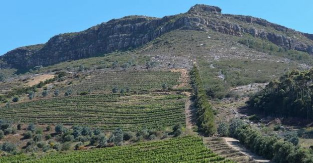 In South Africa, the prohibition of alcohol has put the wine industry to its knees