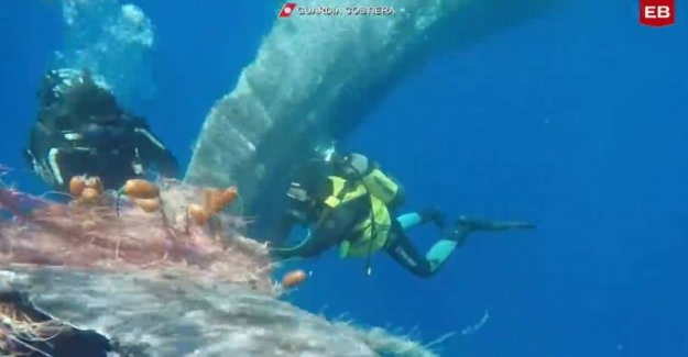 Touching rescue: Big whale in trouble