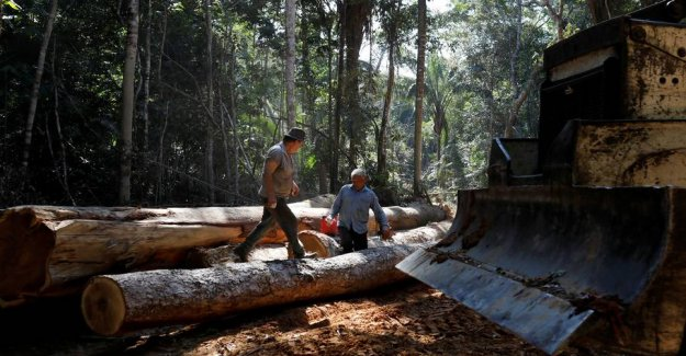 Deforestation in the Amazon continues with increased strength