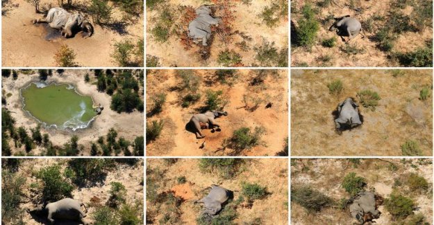 Elephants in the mysterious mass deaths