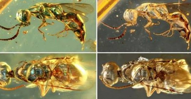 Insects from the dinosaur time had amazing colors