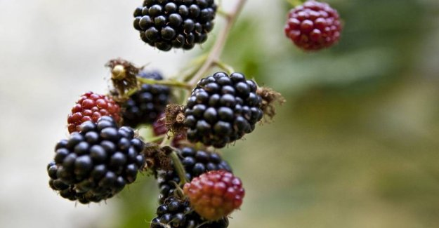 Do others picking berries, fruits and flowers from your garden?