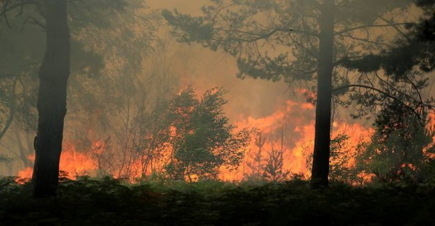 Dramatic escape from the forest fire - finale cancelled