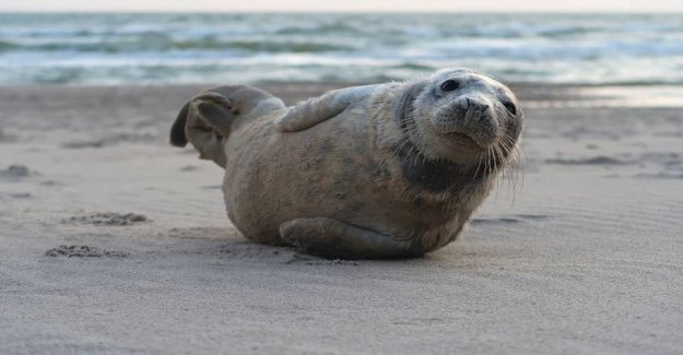 Impossible tourists: Seals get stress on the Branch