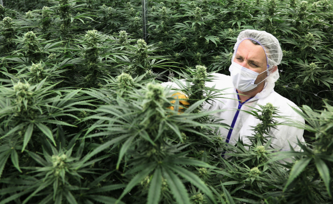 How Cibdol is creating a new market for nutrition based on cannabis plants