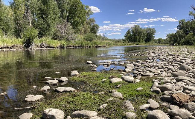 The US West's treasured trout streams are prone to drought and heat