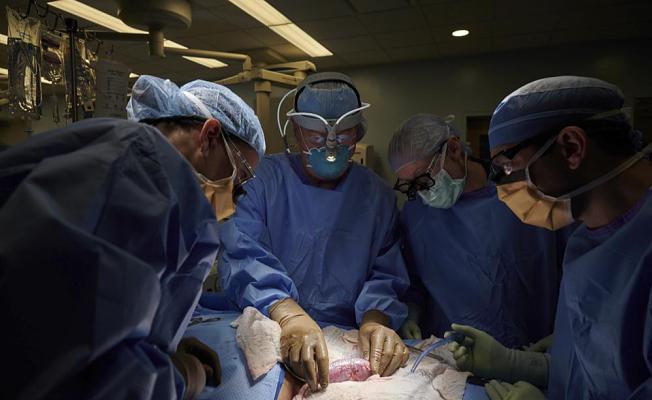 New test brings Pig-to-Human transplants closer