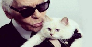 Choupette, the cat to Lagerfeld, disappears from the social. Fans worried. But it could be a caution legal