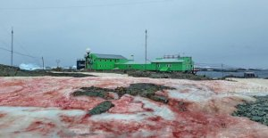 Antarctica is tinged with red because of an algae. It worsens the melting of the ice