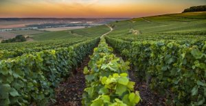 How to become a German pinot noir 2017