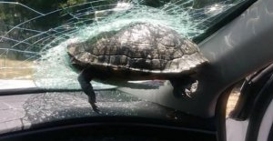 Send warning: Beware of flying turtles on the highway