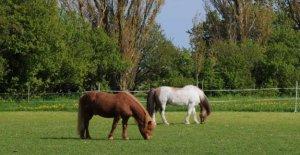 Warning: Toxic seeds are killing horses