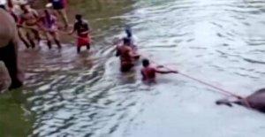 Man arrested after brutal elefantdød in India