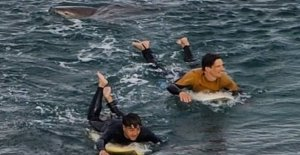 The three meter long shark kills surfer in the australian coastal town