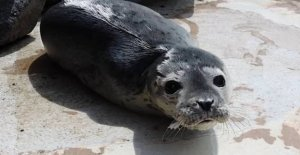 For the first time in 23 years: Seal born at the zoo
