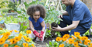 Best Ways To Enjoy Gardening Without...