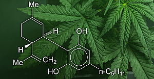 What are CBD flower and delta 8?